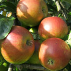 Heritage apples available from Carrob Growers